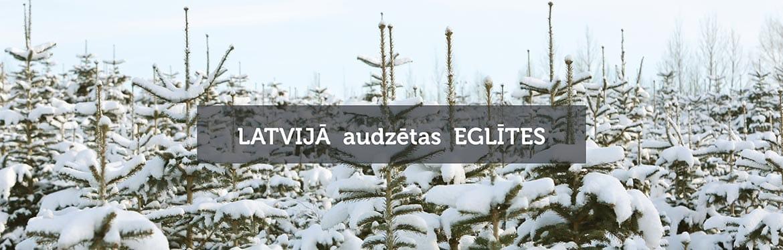 Latvijas Ziemassvētku eglītes